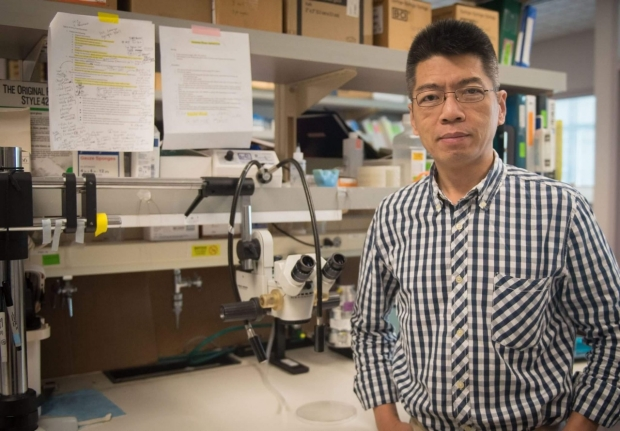 Dr. Xi Wang in the Transplant Immunology Lab