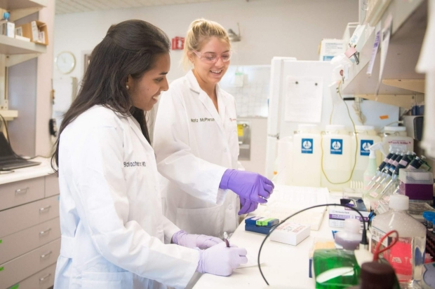 Dr. Marla Glass and colleague in the Transplant Immunology Lab